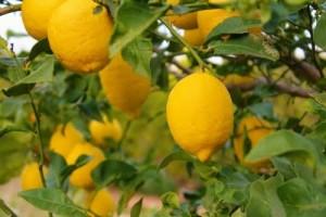 compra-online-naranjas
